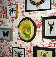 中島美嘉の自宅の蜘蛛